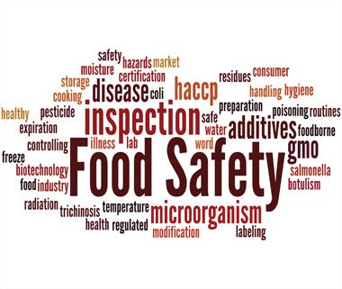 Protocol Food Consultancy | Services